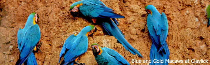 Macaw Clay Lick - Rainforest Expeditions